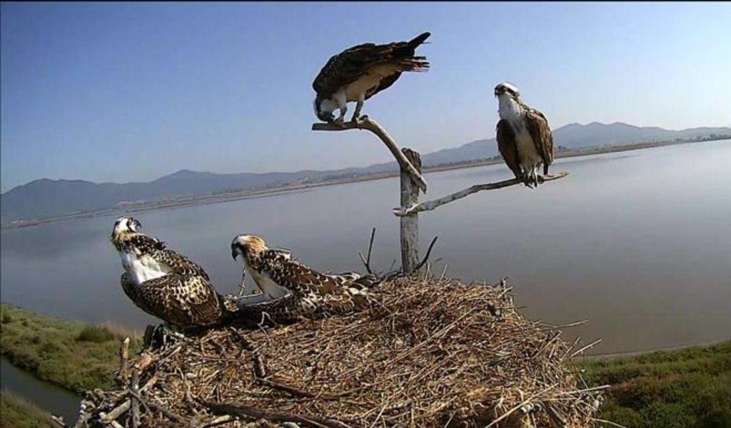 dalla webcam sul nido